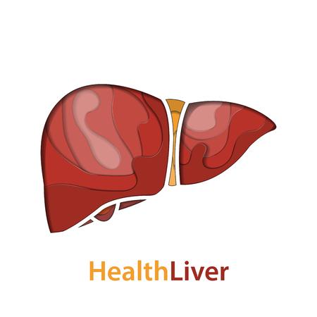 Human liver paper cut concept. vector illustration.