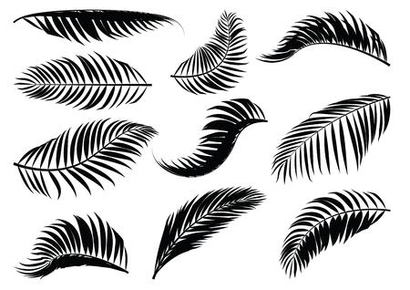 椰子の葉のシルエット。ベクトルの図。