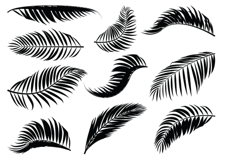 Palm Leaf silhouette. Vector illustration.
