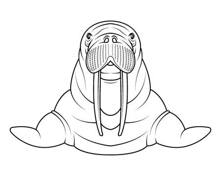 Walrus cartoon drawing illustration. Ilustracja