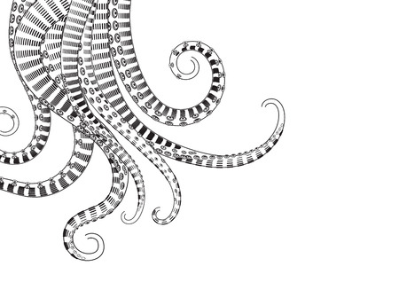Hand Drawn Tentacle. Black and white line drawing of squid. vector Illustrations