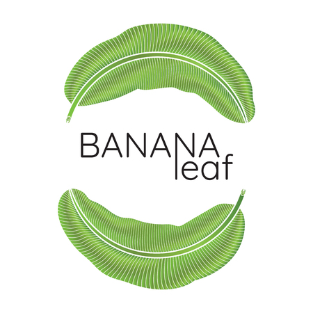 Banana green leaf tropical emblem.