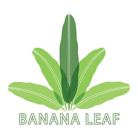 Banana green leaf tropical emblem.