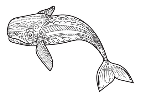 vector Whale for adult anti stress coloring pages. Ornamental tribal patterned illustration for tattoo, poster or print. Hand drawn monochrome sketch. Sea animal collection. Illustration