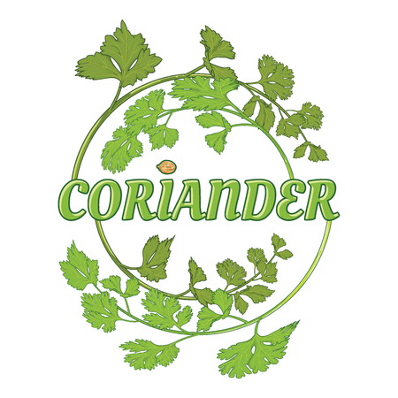 fresh coriander herb, chinese parsley, food, isolated logo, vector illustration.