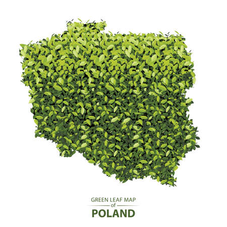 Poland map made up of green leaf on white background vector illustration of a forest is conceptual of the global green environmental issues worldwide 矢量图像