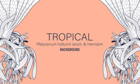 Botanical Platycerium holtumii Jench. & Hennipm hand drawn vector, tropical leaves and flowers line art ink drawing background.