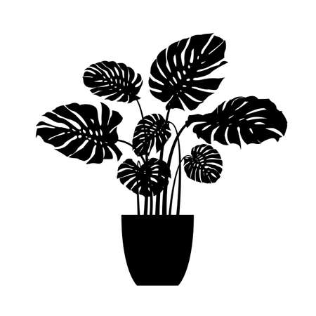 Houseplant monstera deliciosa in a pot. plant vector silhouette isolated on white background 矢量图像
