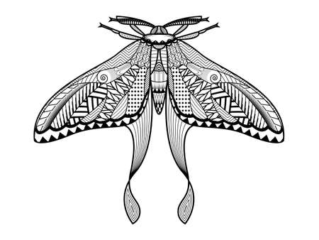 Vector moth of hand drawn insects illustrations. Abstract butterfly coloring book.