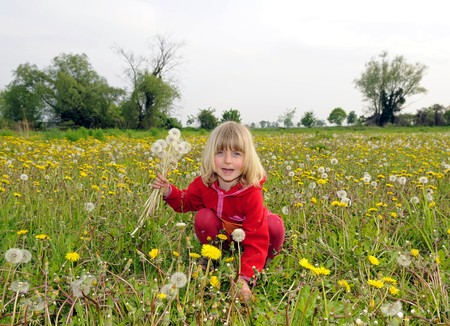 cull: little girl with dandelions Stock Photo