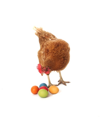 chicken with easter eggs Stock Photo - 9145848