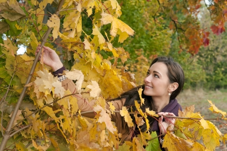 young woman looks through yellow autumn leaves Stock Photo - 16588591