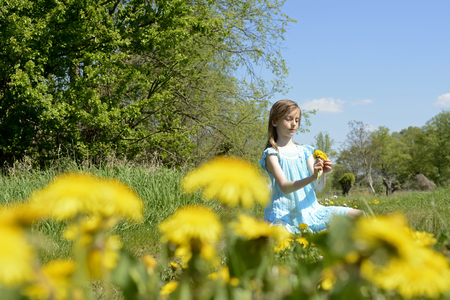blond little girl with dandelions photo