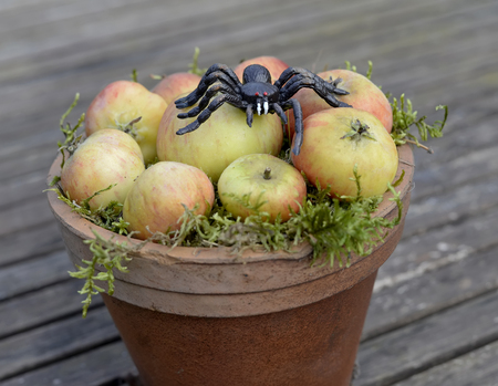 apples and spider, halloween decoration Stock Photo