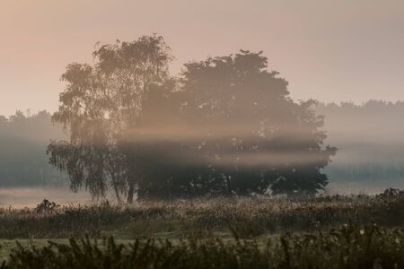 morning mist over a field in the dust