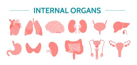 Internal organs set. Healthcare icons isolated on a white background. Flat vector illustration.