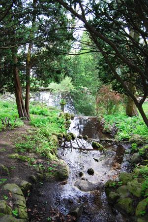 shady: Babbling brook in a shady spot