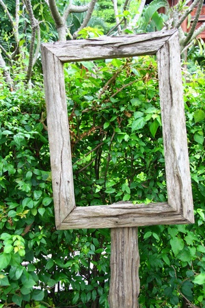 green wall: picture frame on the background of nature Stock Photo