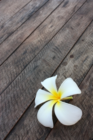 white and yellow frangipani flowers on natural fibre background photo