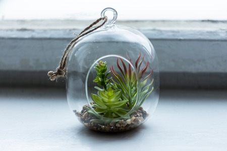 Decorative green plant in a glass flask near the window. Фото со стока - 122589054