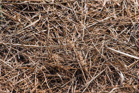 Background and texture of old dry grass hay.