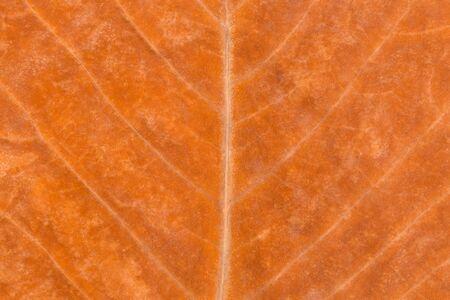 Golden Autumn Leaf Background. Macro Shot of a Golden Autumn Leaf Background. Фото со стока