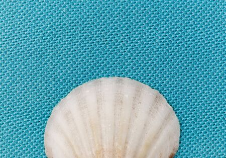 Isolated seashell on a trendy aqua blue background. Close-up of shell.