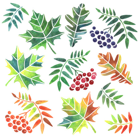 ashberry: Set of handdrawn watercolor leaves isolated on white background. Vector illustration.