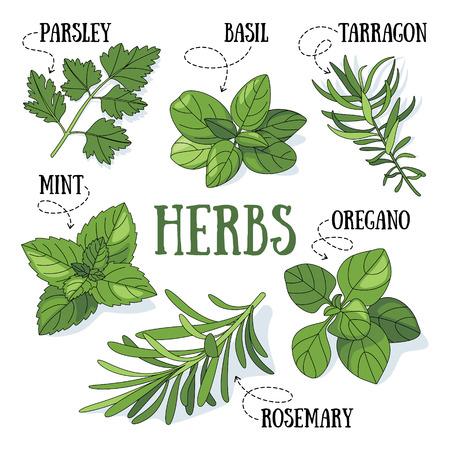 Set di erbe aromatiche fresche.