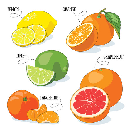 Set van 5 vector citrusvruchten illustraties.