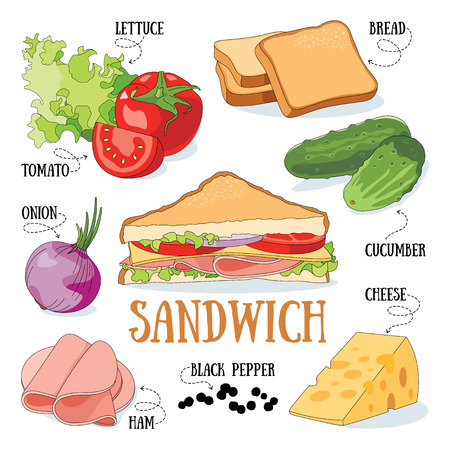 Sandwich and its ingredients. Fast food vector illustration. Illustration