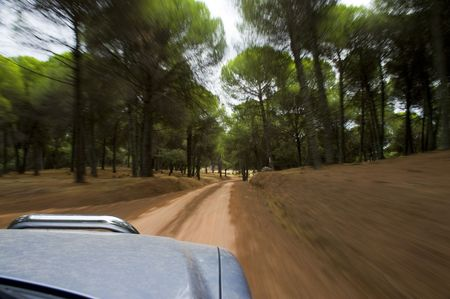 fourwheeldrive: Blurred action from car at high speed in a forest track