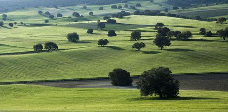 paisaje mediterraneo: Verde paisaje mediterr�neo lleno de Quercus Foto de archivo