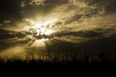 lightbeam: Cloudy sunrise in golden tones with vegetation