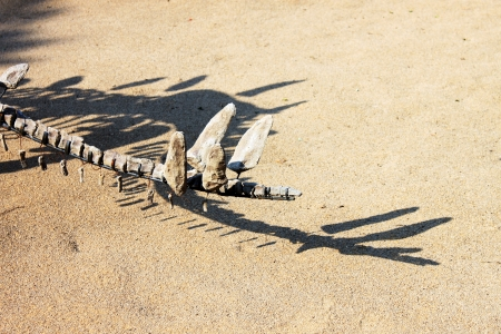 Fossil of dinosaur tail and shadow photo
