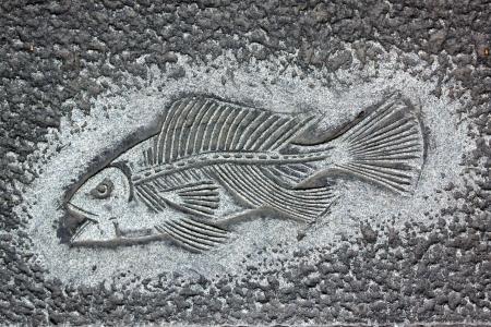 carve: Fish carve Stock Photo