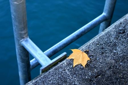 Lake Luzern, ladder leaf and lake in swissland photo