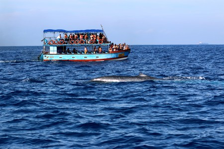 Whale watching in Mirissa, Sri Lanka Редакционное