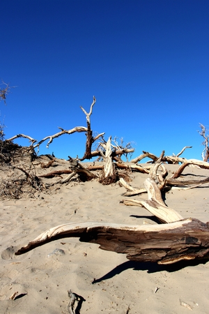 Dead tree in Death Valley National Park, California