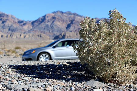 survives: A car behind shrub survives in the harsh landscape of a desert sand dune in Death Valley National Park, California. Stock Photo