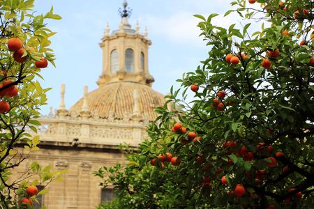 Seville cathedral and orange tree Imagens