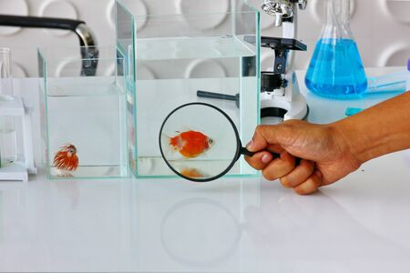the researcher or scientist or technician equipment on white table in clean room. the researcher use magnifying glass for expand the golden fish for test and record