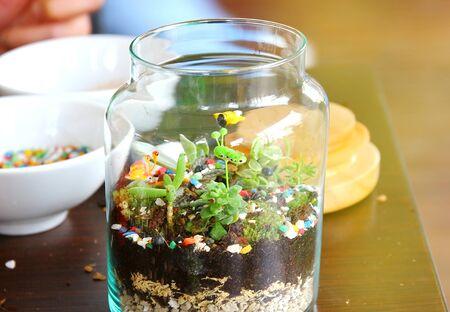 the bottle garden,hobbies