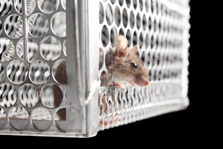 jailbreak: rat try to escape from trap on black background