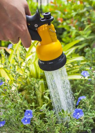 regando plantas: regar las plantas en el jardín