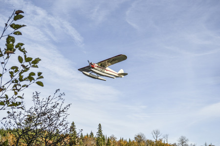 flying float: Small float airplane taking off over the woods.