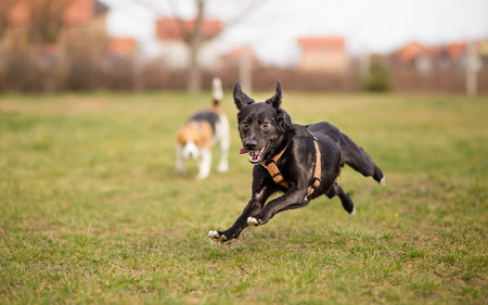 Extremely happy dog