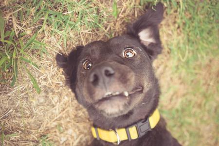 混合された品種犬 selfie 写真 写真素材