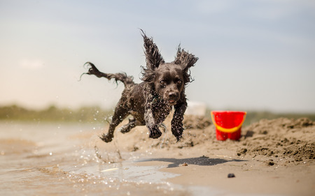 Dog running on the beach Stock Photo
