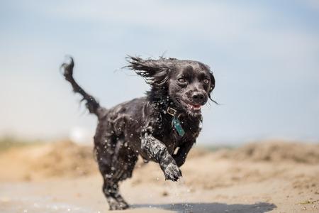 perro corriendo: perro feliz corriendo en la playa